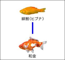 wakin01.jpg